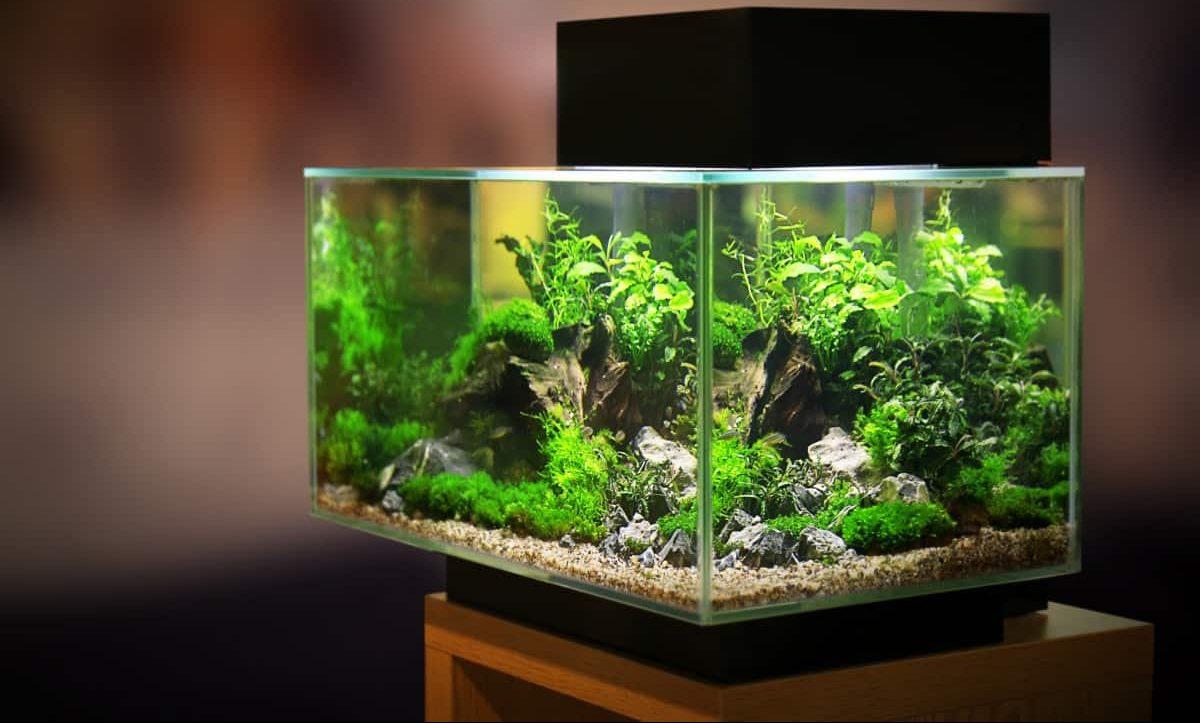 The Best Betta Fish Tanks