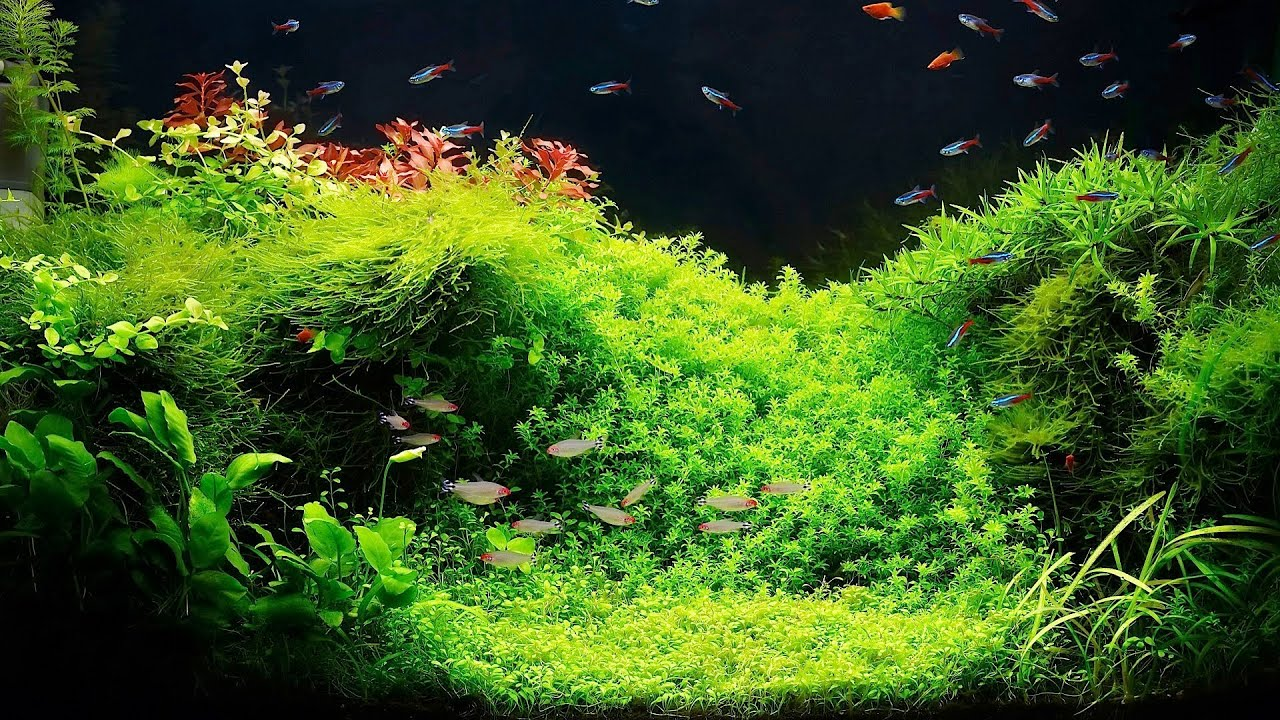 How To Grow Live Plants In An Aquarium?