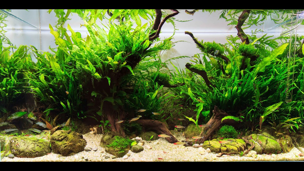 How To Care For Plants In Aquarium?