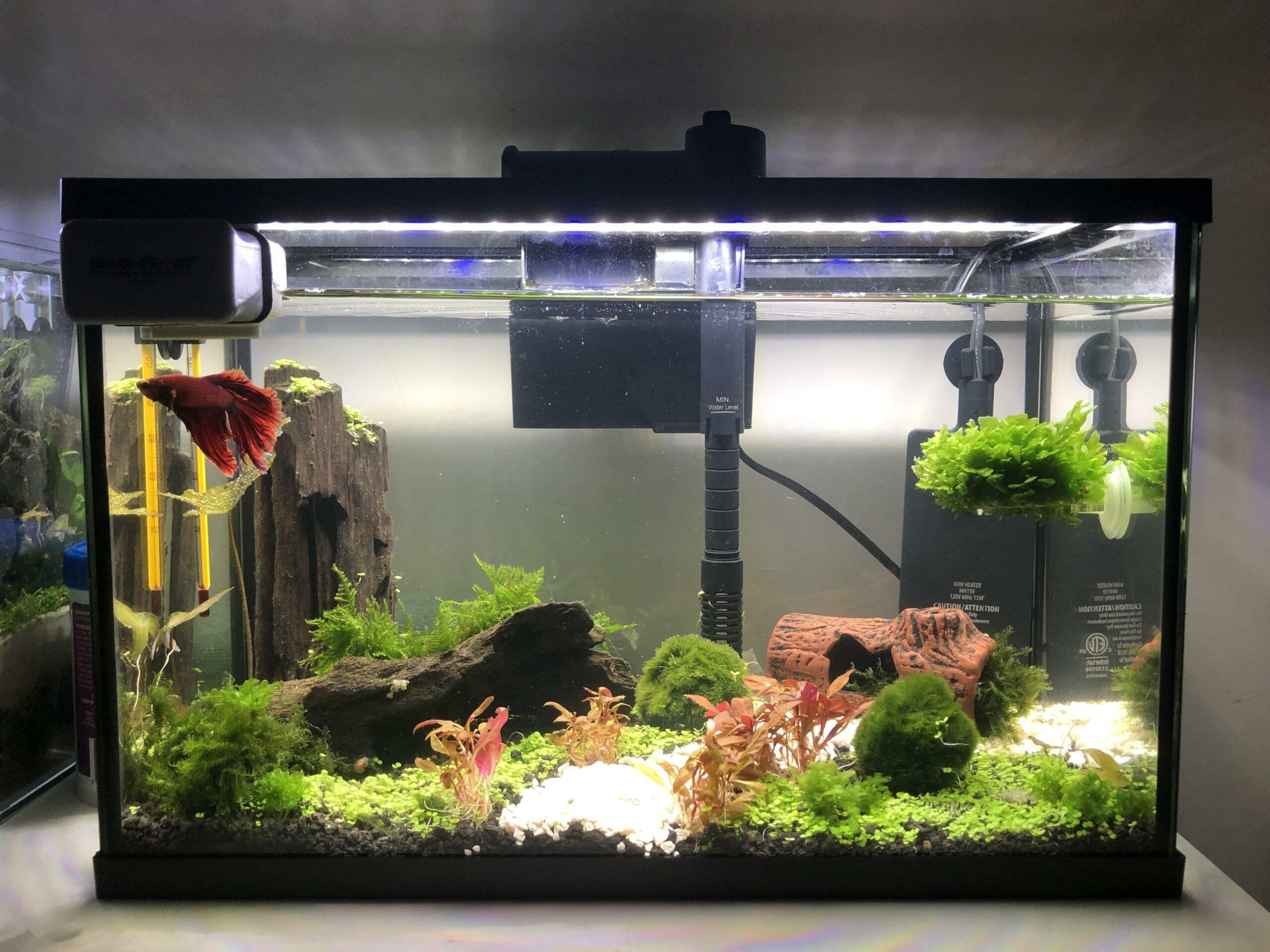 How To Set Up Betta Fish Tank