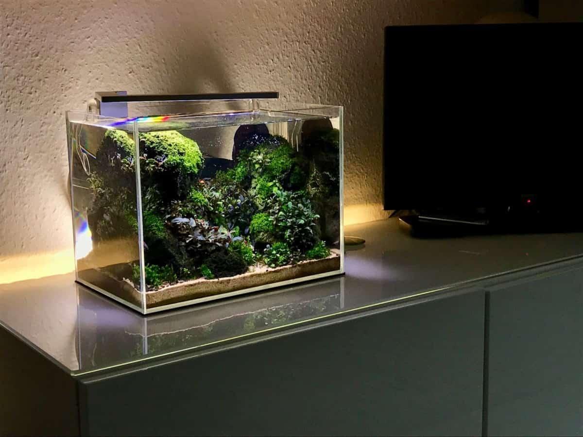 How To Set Up A Nano Aquarium