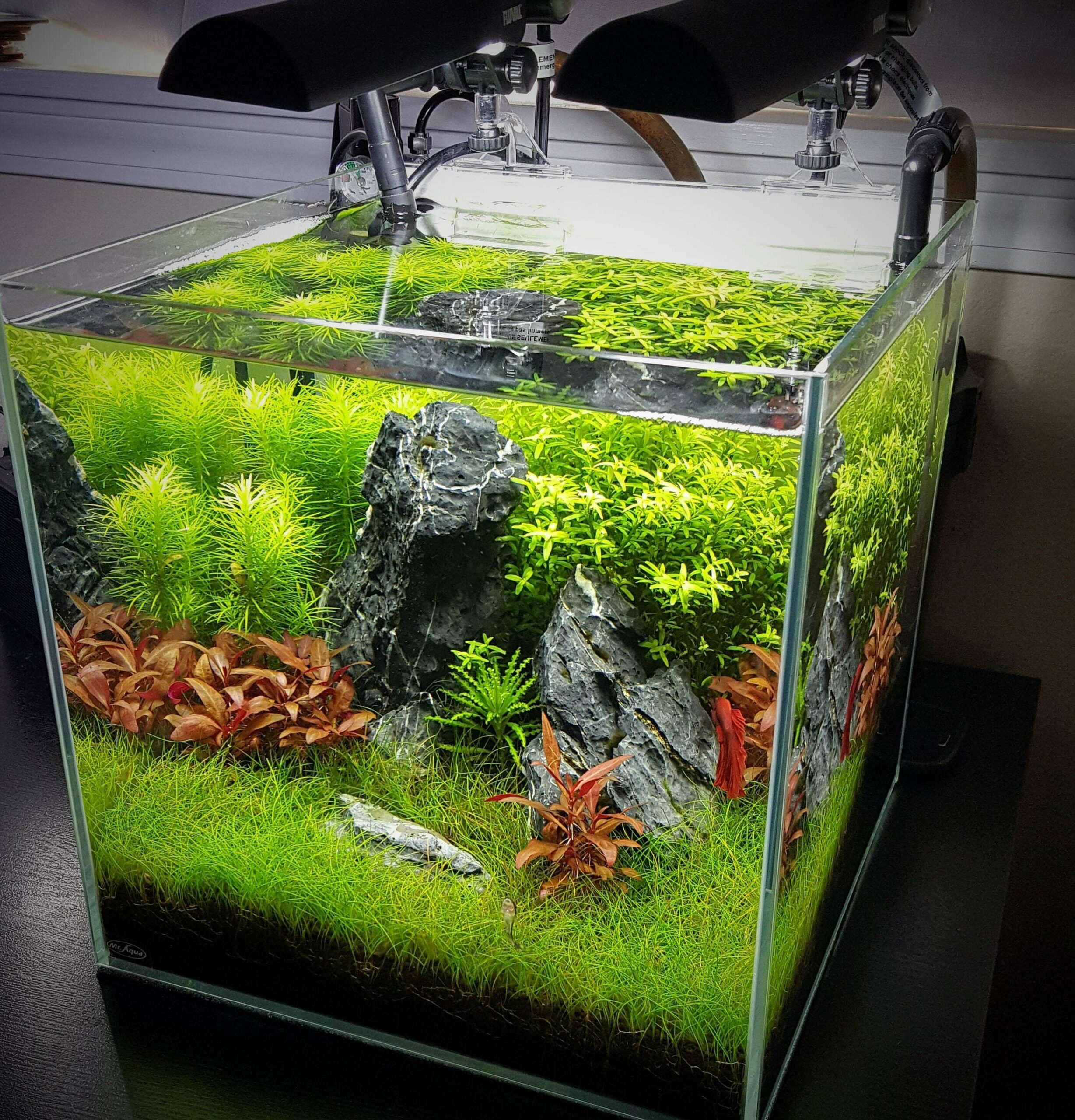 10 Awesome Nano Aquariums For Freshwater and Saltwater Tanks