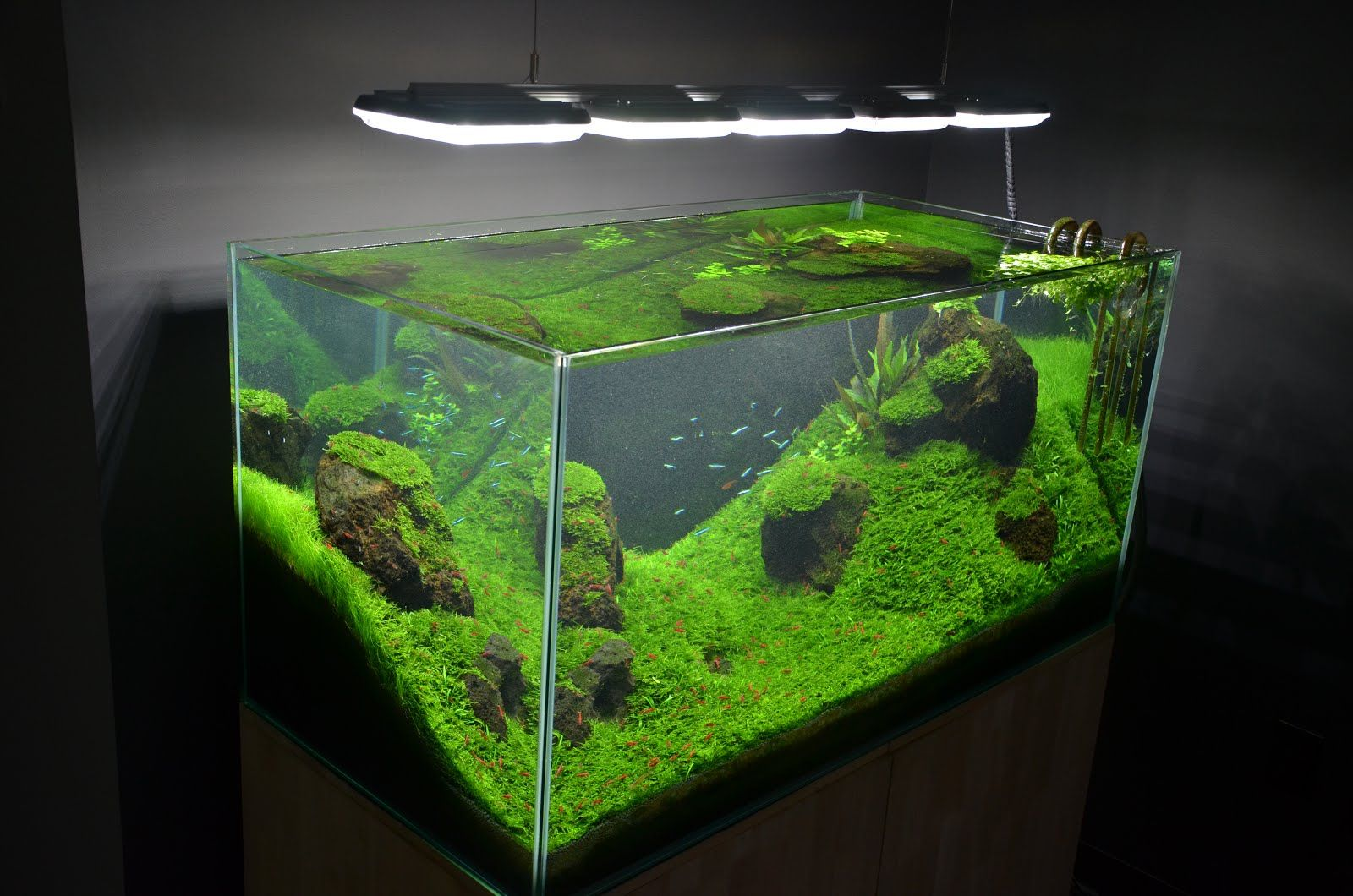 10 Best Fish Tanks: SeaClear, Fluval & More