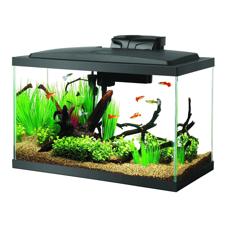 Aqueon Fish Tank
