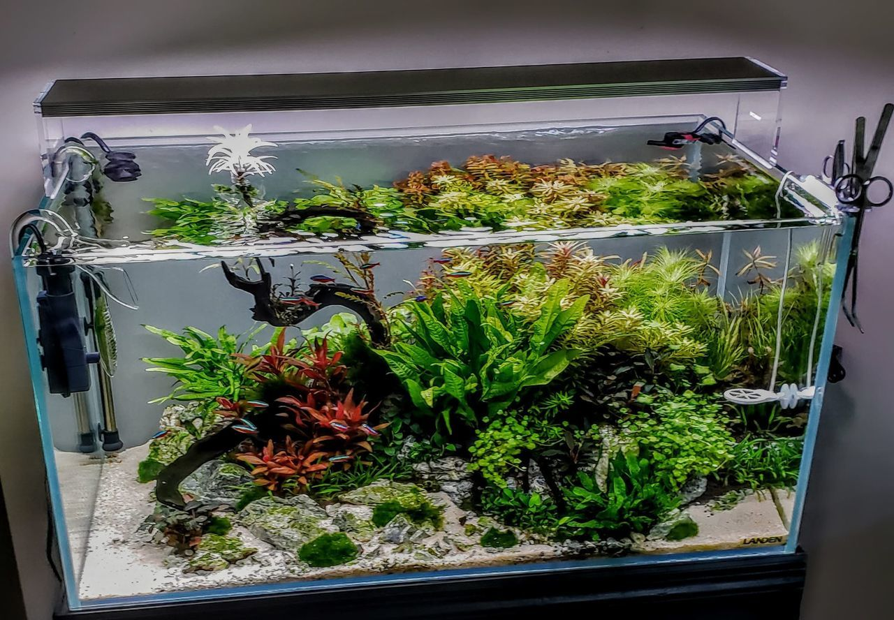 Landen Rimless Aquarium
