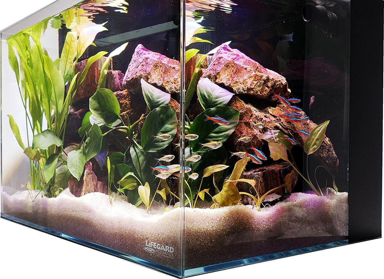 Lifegard Aquatics Crystal Rimless Aquarium Tank