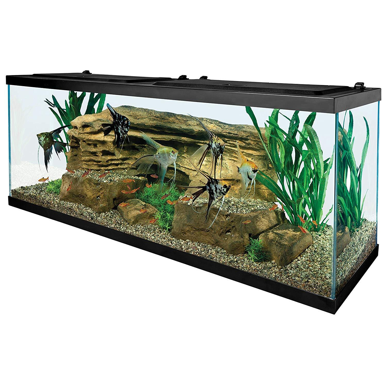 Tetra 55 Gallon Aquarium Kit with Fish Tank