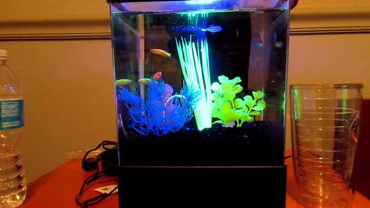 Tetra GloFish 3 Gallon Aquarium