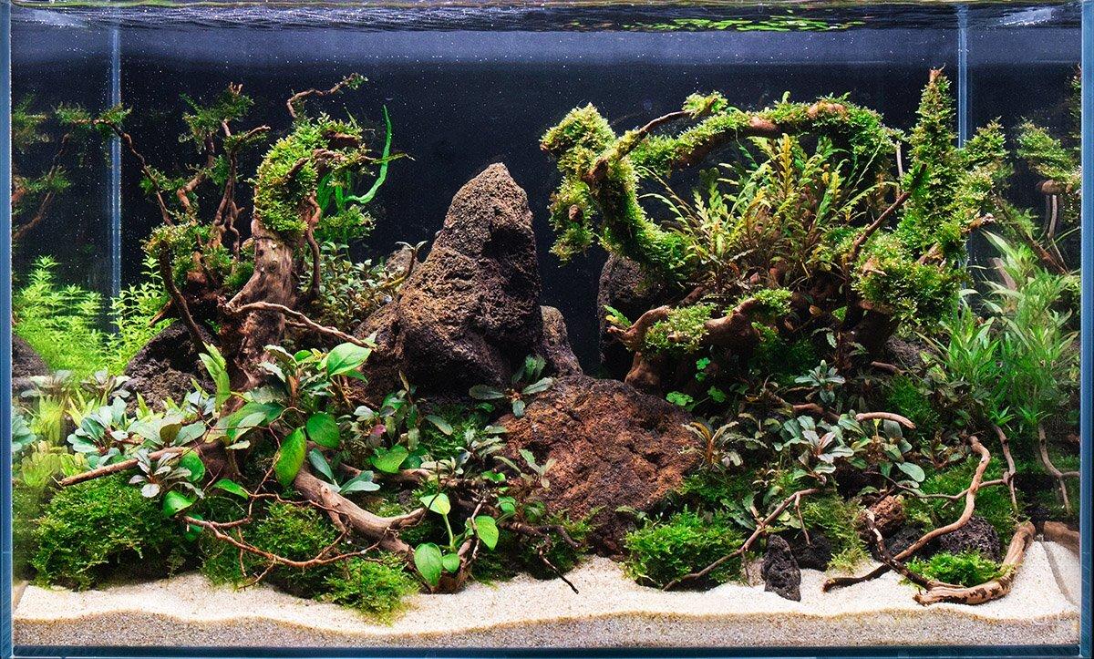 Ultum Nature Systems Rimless Tank
