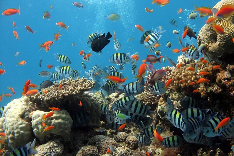 24 Best Online Fish Stores