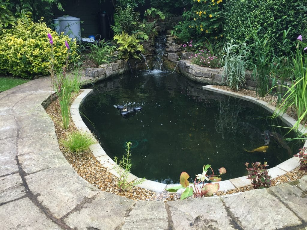 5 Best Pond Filters For Small Ponds and Large Ponds