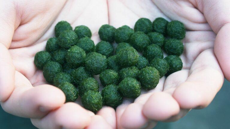 Handfull of dry Marimo Moss Balls.