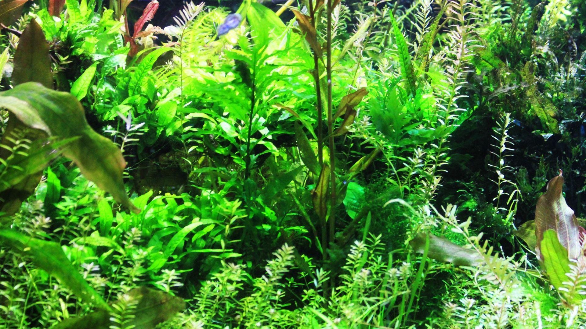 31 Best Low Light Aquarium Plants